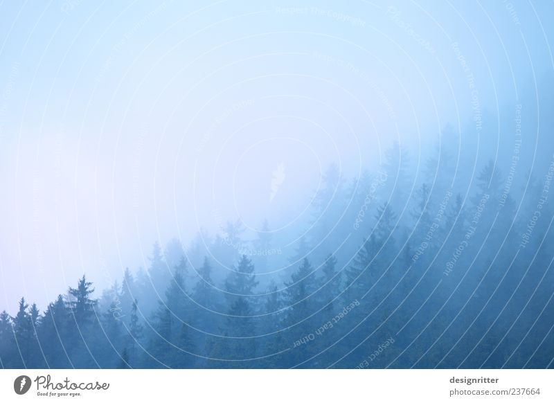 Nature Blue Tree Clouds Calm Forest Environment Landscape Cold Mountain Moody Weather Fog Hill Dew Haze