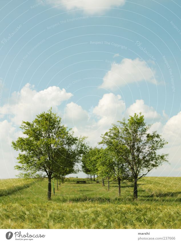 Sky Nature Blue Green Tree Plant Summer Clouds Relaxation Landscape Meadow Spring Grass Weather Field Climate