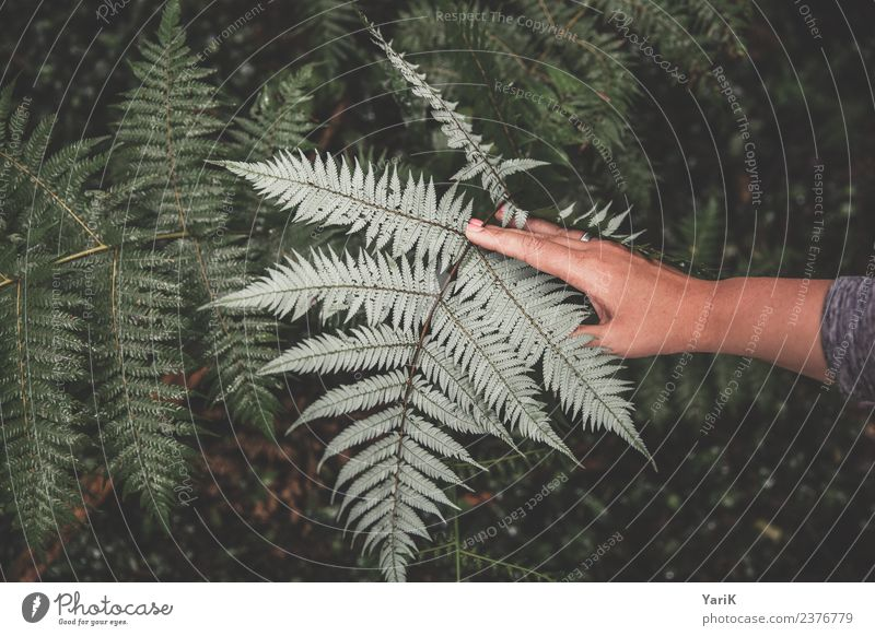 Nature Plant Summer Green Hand Leaf Forest Grass Bushes Beautiful weather Fingers Wet Virgin forest Silver Damp Logo