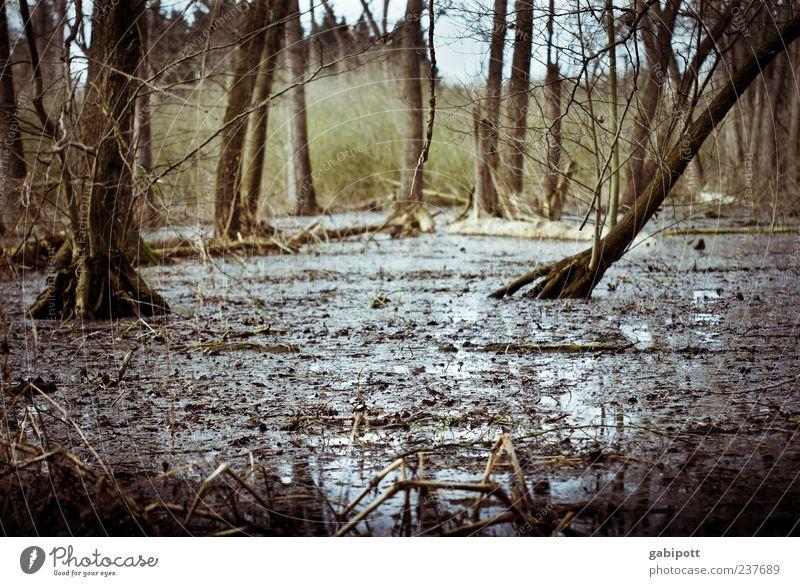 Forest under water Environment Nature Landscape Plant Elements Earth Water Climate change Storm Rain Tree Bushes Virgin forest Bog Marsh Rich pasture