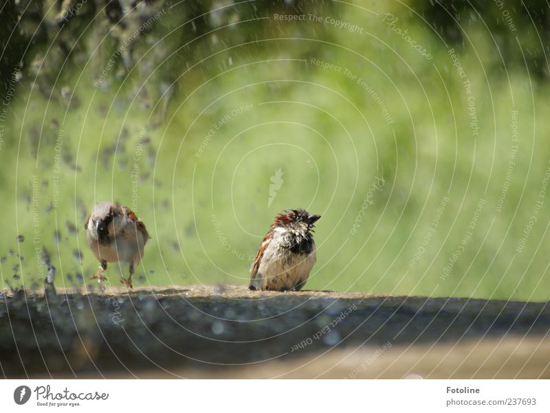 Nature Water Green Summer Animal Park Brown Bright Bird Environment Wet Drops of water Sit Feather Natural