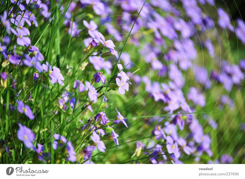 Nature Flower Green Plant Summer Calm Relaxation Blossom Spring Contentment Environment Multiple Violet Many Beautiful weather Flower meadow