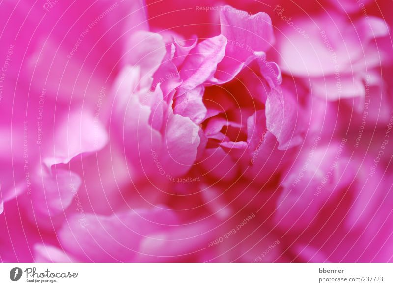 Nature Beautiful Plant Summer Flower Environment Spring Garden Blossom Pink Happiness Illuminate Romance Soft Kitsch Blossoming