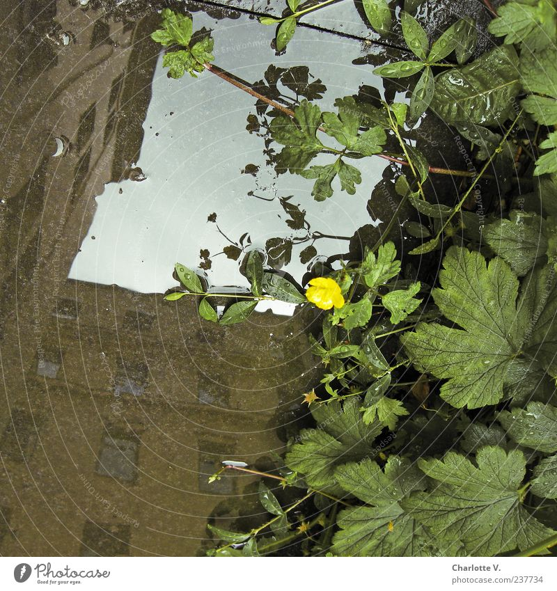 Reflection of houses Plant Water Drops of water Summer Wild plant House (Residential Structure) Building Apartment Building Wall (barrier) Wall (building)