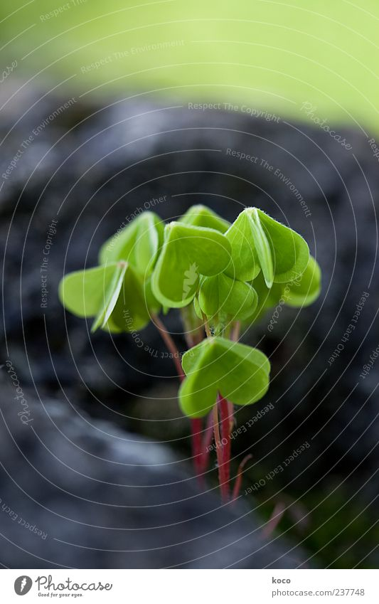 Nature Green Plant Red Summer Leaf Black Environment Spring Happy Small Stone Heart Natural Growth Flower