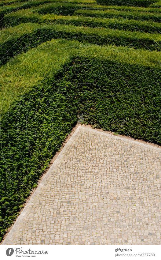 Nature Green Plant Leaf Line Exceptional Arrangement Growth Bushes Corner Cobblestones Testing & Control Distress Sharp-edged Paving stone Irritation