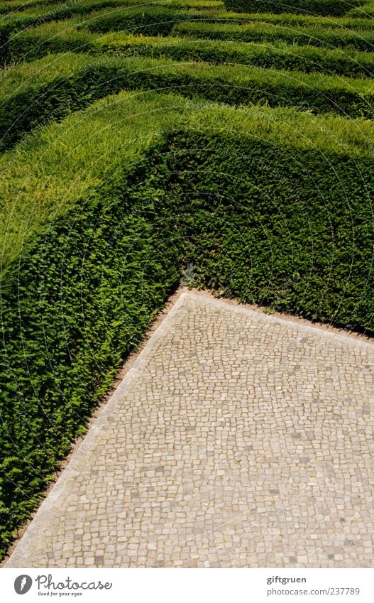 no way out Nature Plant Bushes Leaf Foliage plant Exceptional Green Complex Testing & Control Distress Hedge Maze Labyrinth Horticulture Landscaping