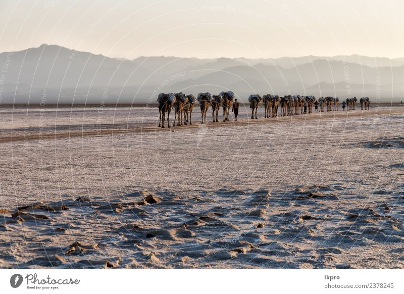in danakil ethiopia africa Sky Nature Vacation & Travel Landscape White Animal Loneliness Far-off places Mountain Black Street Sadness Tourism Lake