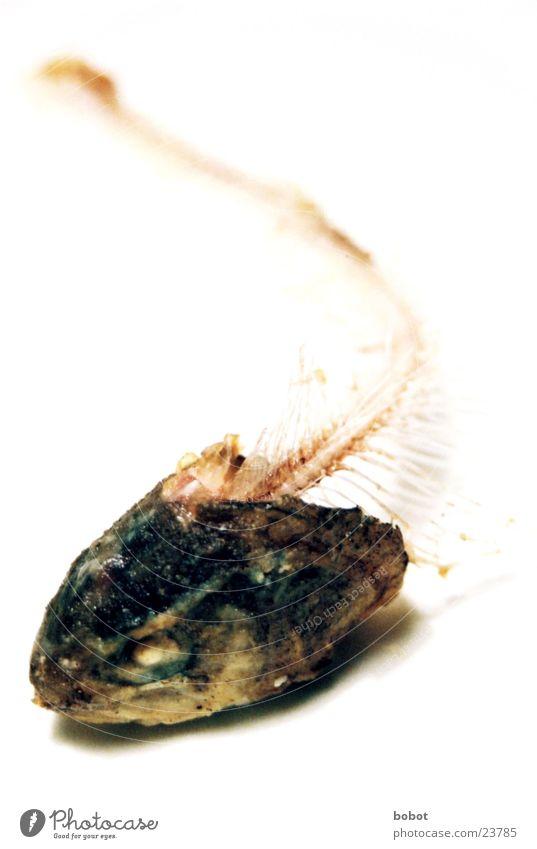 Eyes Nutrition Fish Barn Water wings Skeleton Fishery Fish bone Gill