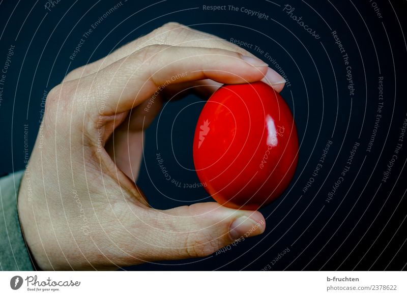 Easter egg Food Nutrition Breakfast Man Adults Hand Fingers To hold on Red Black Egg Hen's egg Indicate Interior shot Studio shot Close-up Artificial light