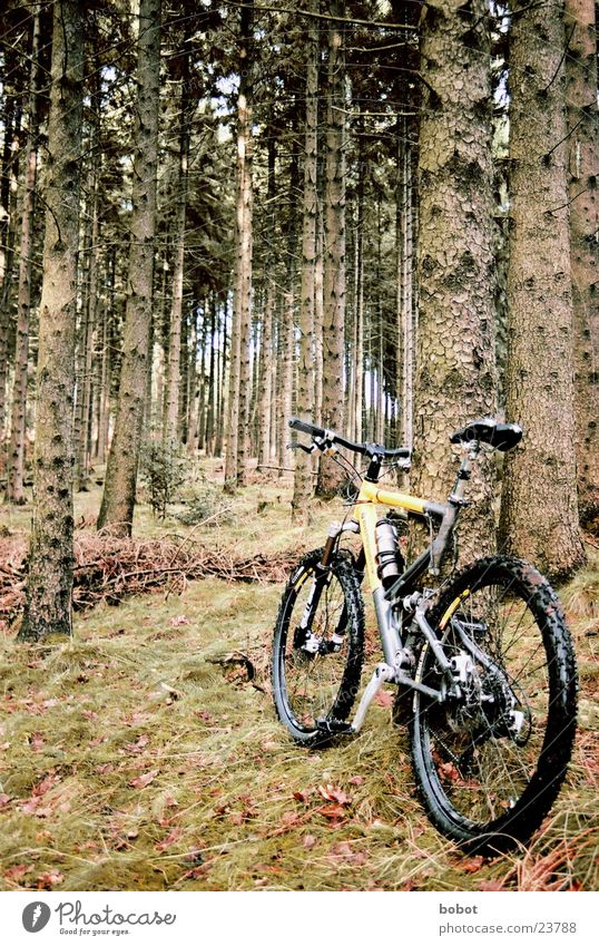The goat in the forest (I) Mountain bike Bicycle Forest Leaf Wood Tree bark Perspire Endurance Suspension Transport disc brakes uphill downhill X-trial