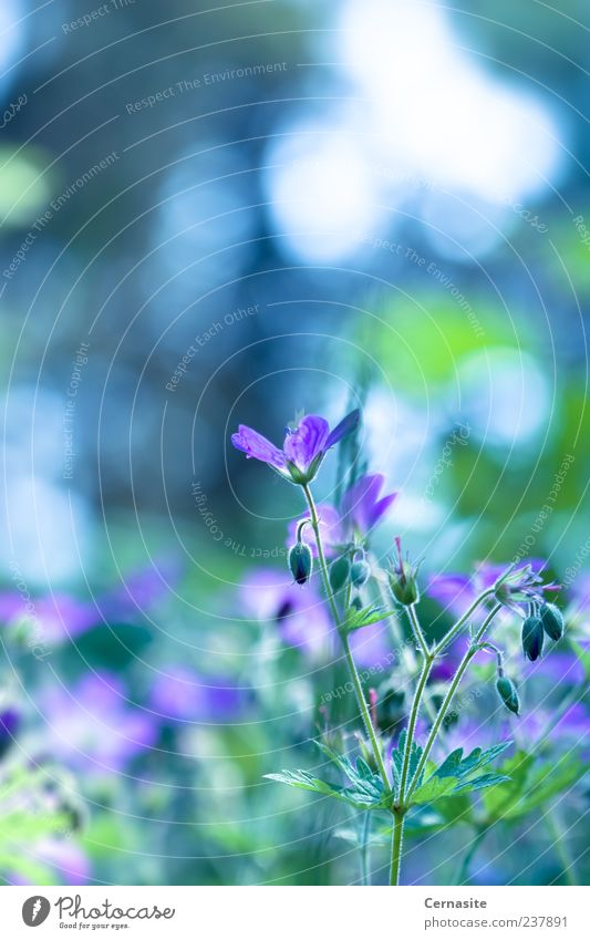 Mesmerized Nature Plant Sunlight Summer Beautiful weather Flower Leaf Blossom Park Meadow Field Esthetic Fragrance Authentic Simple Fresh Together Soft Blue
