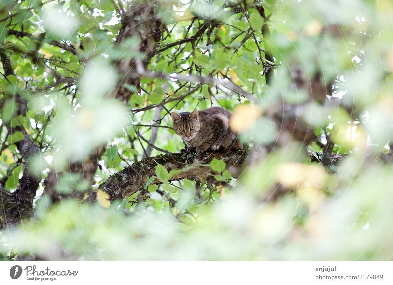 Cat on a tree between leaves Pet 1 Animal Baby animal Observe Discover Catch Hunting Looking Kitten Cat's head Climbing Tree Branch Leaf canopy Bushy