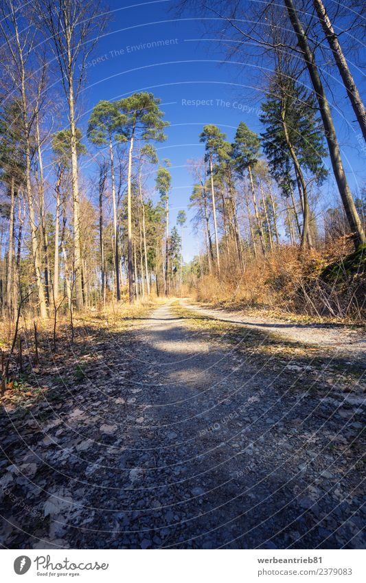 Rural dirt road into the forest Nature Vacation & Travel Plant Summer Beautiful Colour Tree Forest Street Spring Sports Tourism Hiking Idyll Adventure Walking