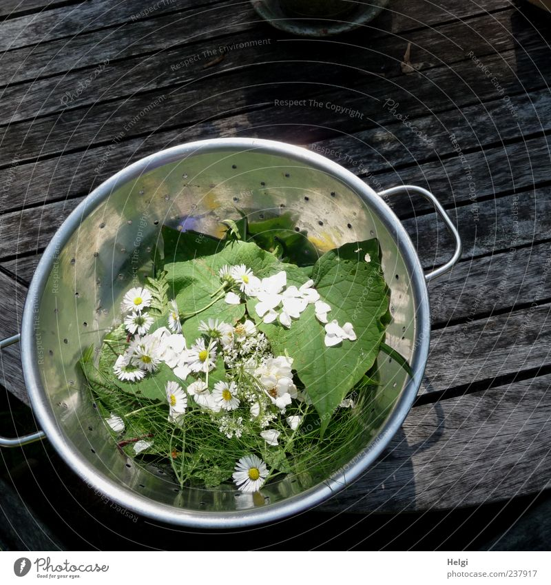 from the herb kitchen... Food Vegetable Lettuce Salad Herbs and spices Nutrition Organic produce Vegetarian diet Diet Bowl Plant Flower Leaf Blossom
