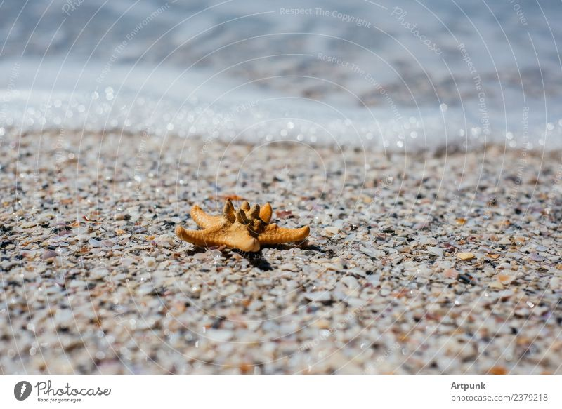 A starfish on the sand Starfish Animal Coast Summer Sand Ocean Surf Water Vacation & Travel sea foam Waves Seaside atmopshere Tropical