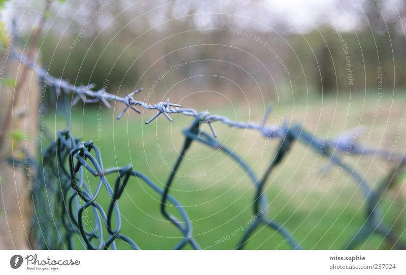 XXX Nature Grass Garden Sharp-edged Point Thorny Green Fence Barbed wire Barbed wire fence Barrier Border Wire Detail Copy Space right Copy Space top