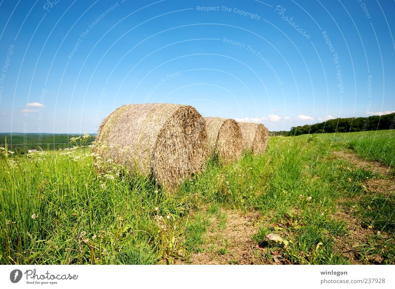 straw Sky Plant Environment Landscape Art Work and employment Field Horizon Design Grain Agriculture Harvest Beautiful weather Farmer Economy Tradition