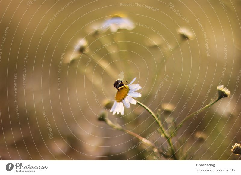 togetherness Nature Plant Animal Beautiful weather Flower Grass Blossom Touch Blossoming Crawl Happy Near Natural Marguerite Well-being Beetle Colour photo