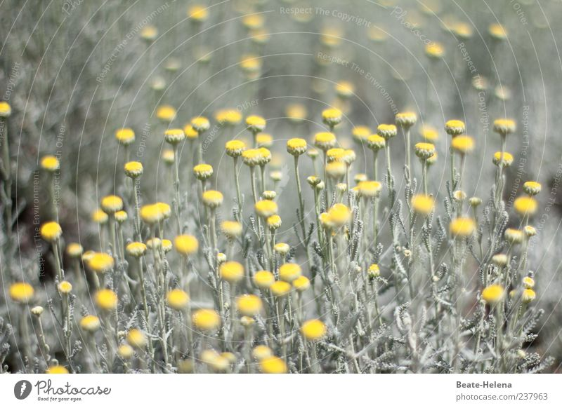 Nature Green Beautiful Plant Flower Yellow Gray Moody Esthetic Illuminate Beautiful weather Blossoming Foliage plant Spring flower Flowering plant