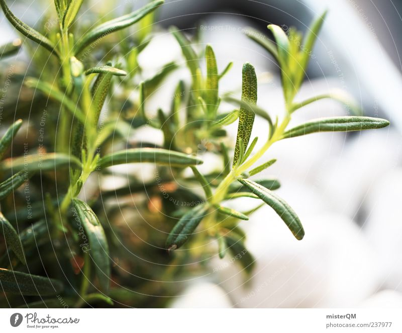 Kitchen spice. Environment Nature Plant Climate Rosemary Herbs and spices Harvest Own Decoration Useful Agricultural crop Green Ecological Healthy