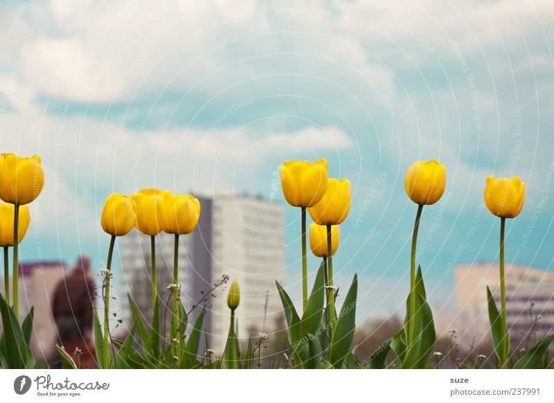 Second Spring Fragrance Summer House (Residential Structure) Environment Nature Landscape Plant Sky Clouds Climate Beautiful weather Flower Tulip Town High-rise