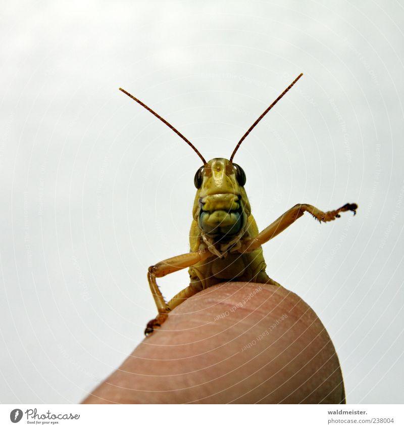 Animal Wild animal Cute Trust Joie de vivre (Vitality) Watchfulness Pet Feeler Wave Joy Compassion Locust Perspective