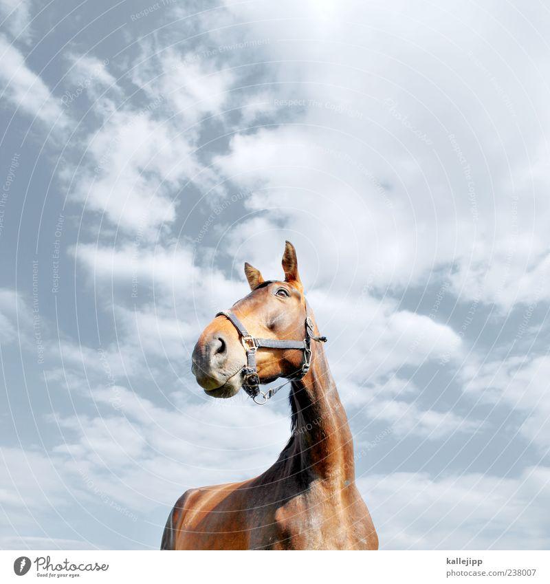 Sky Nature Animal Clouds Style Power Elegant Lifestyle Horse Ear Beautiful weather Pelt Watchfulness Neck Pride Farm animal