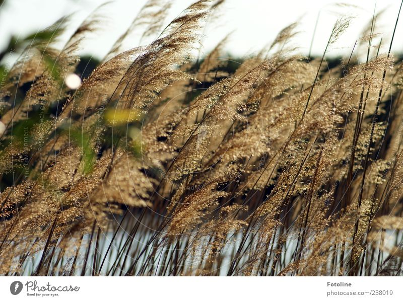 At the lake Environment Nature Landscape Plant Elements Water Sky Cloudless sky Summer Lakeside Bright Near Natural Common Reed Colour photo Multicoloured