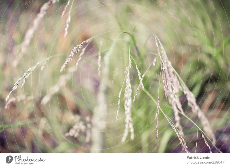 grass whispering Environment Nature Plant Grass Blossom Foliage plant Wild plant Meadow Colour photo Exterior shot Close-up Detail Day Light Blur