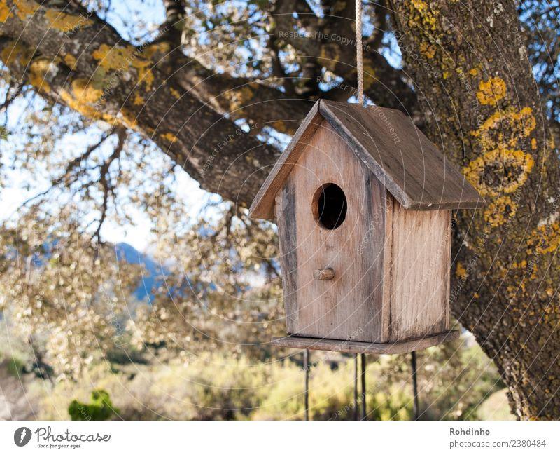 bird house Flat (apartment) House (Residential Structure) Garden Wood Brown Yellow Bird Birdhouse Tree house Nesting box Nesting place Dream house Oak tree