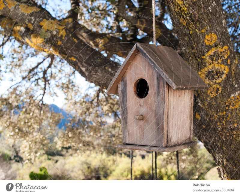Tree House (Residential Structure) Yellow Wood Garden Bird Brown Flat (apartment) Rope Oak tree Judder Birdhouse Dream house Nesting box Tree house