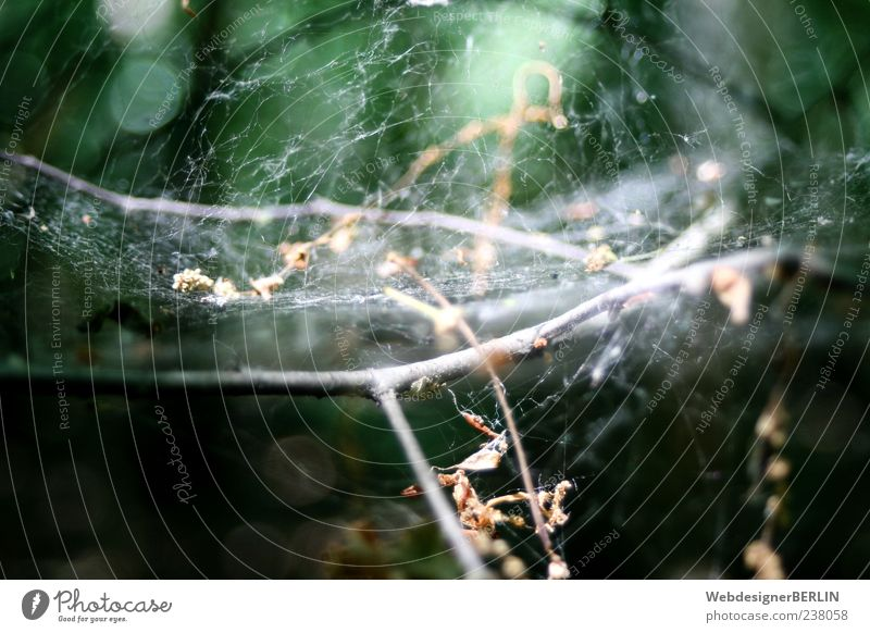Nature Green Plant Branch Depth of field Shriveled Spider's web