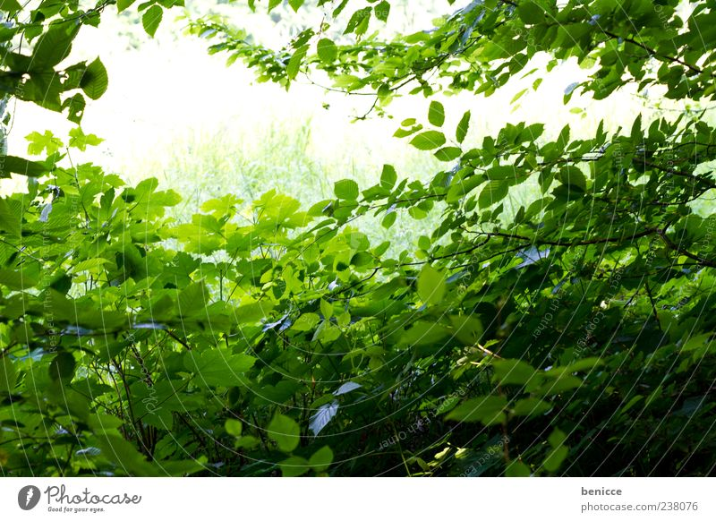 Nature Green Tree Summer Leaf Forest Environment Spring Background picture Empty Many