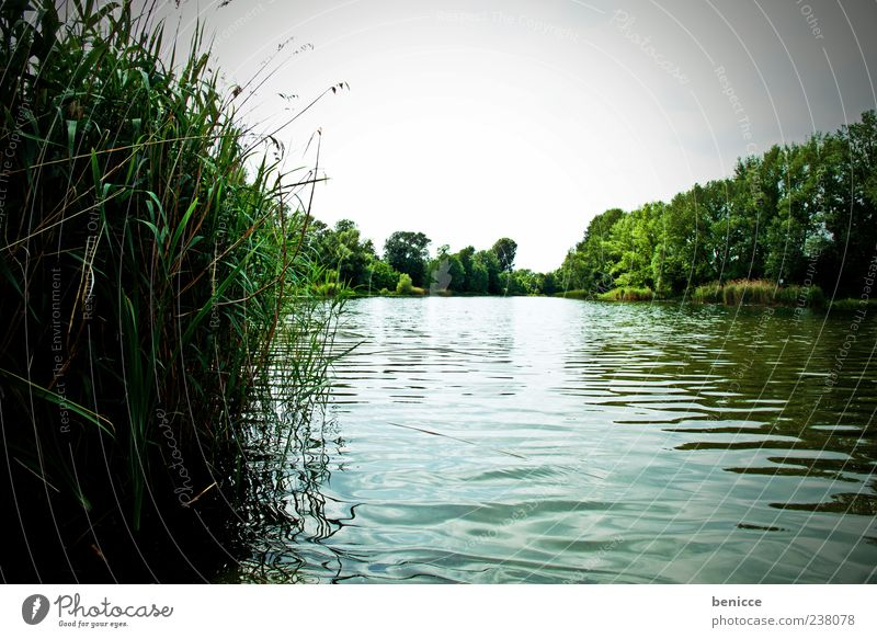 Sky Nature Water Green Summer Spring Lake Europe River Common Reed Panorama (Format) Surface of water Austria Plant Typhaceae