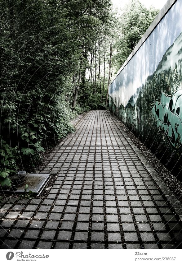 Nature Green Tree Calm Loneliness Environment Dark Cold Wall (building) Graffiti Lanes & trails Dirty Arrangement Perspective Bushes Gloomy