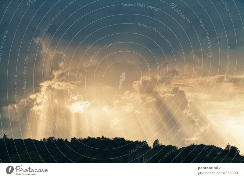 Sun in the shade Landscape Clouds Storm clouds Sunlight Weather Forest Blue Yellow Gold Colour photo Exterior shot Experimental Dawn Light (Natural Phenomenon)