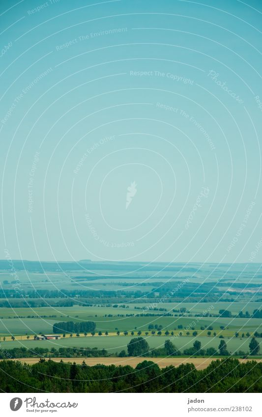 Sky Blue Tree Far-off places Environment Landscape Meadow Freedom Brown Field Infinity Agriculture Wanderlust Forestry Bird's-eye view Aerial photograph