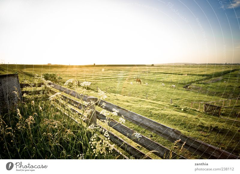 Nature Vacation & Travel Calm Relaxation Environment Landscape Meadow Grass Moody Horizon Germany Tourism Bushes Horse Idyll Beautiful weather