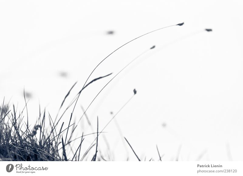 Nature Plant Life Movement Grass Gray Blossom Wind Dance Delicate Gale Tilt Dynamics Blade of grass Bend