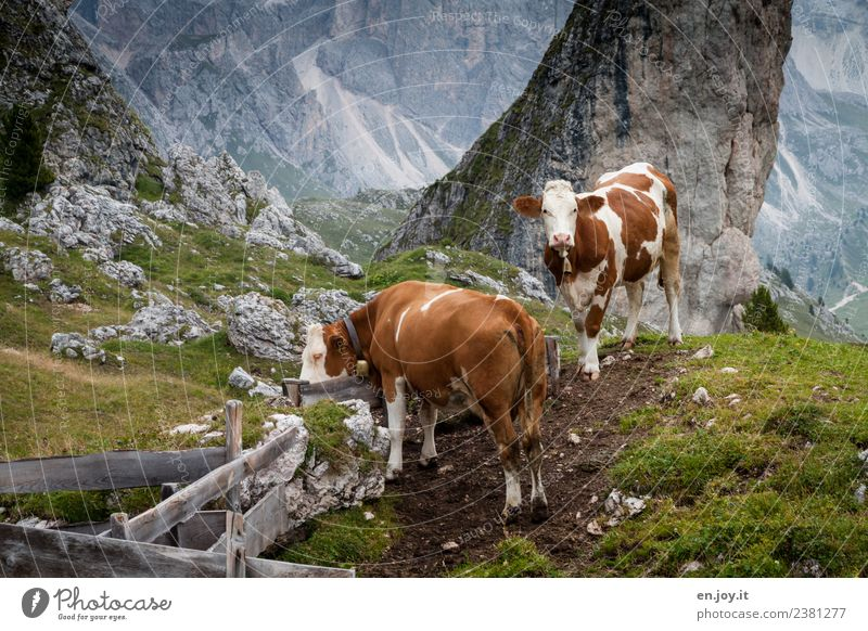 two Well-being Contentment Vacation & Travel Trip Summer Summer vacation Mountain Hiking Nature Landscape Meadow Hill Rock Alps Dolomites Pasture Alpine pasture