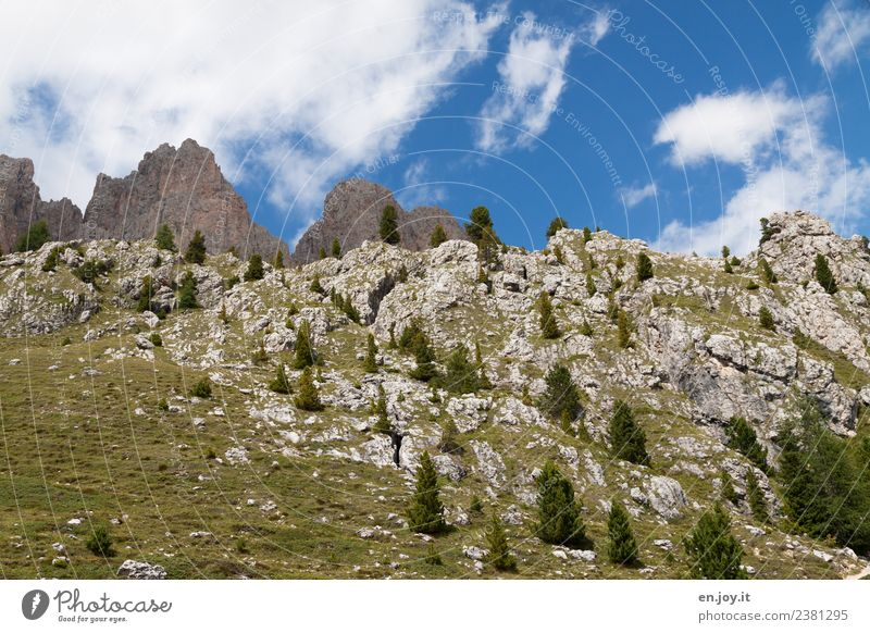 Rocky Vacation & Travel Trip Mountain Hiking Environment Nature Plant Sky Fir tree Coniferous trees Spruce Meadow Alps Dolomites Peak South Tyrol Relaxation
