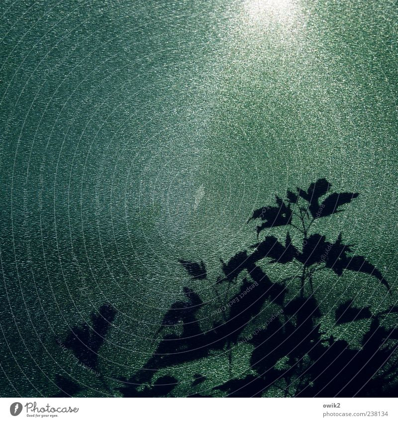 Nature White Green Plant Leaf Black Weather Glittering Growth Illuminate Beautiful weather Plastic Copy Space Mystic Wild plant Vine tendril