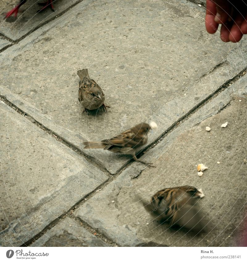 Sparrows of Venice Bird 3 Animal To feed Feeding Hand Pavement Square Exterior shot Bird's-eye view Breadcrumbs Motion blur Fingers Judder
