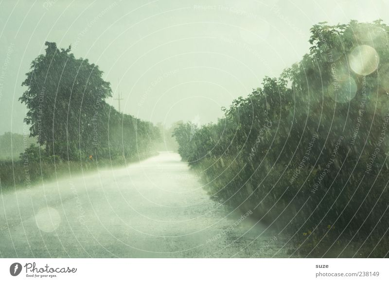 In the rain Environment Nature Elements Sky Climate Weather Bad weather Storm Rain Tree Street Lanes & trails Authentic Wet Loneliness Colour photo