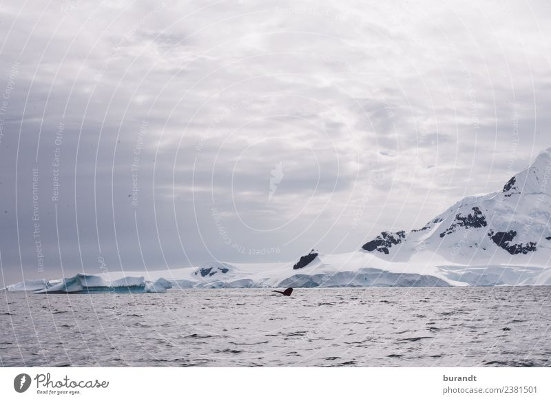 no fish II Nature Landscape Clouds Climate Climate change Ice Frost Snow Mountain Antarctic Peninsula Antarctica Peak Snowcapped peak Glacier Ocean Arctic Ocean