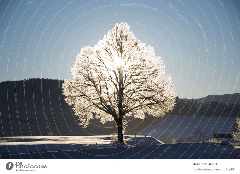 tree of life Nature Plant Animal Elements Winter Ice Frost Snow Tree Hill Mountain Allgäu Sign Emotions Happy Contentment Joie de vivre (Vitality) Power