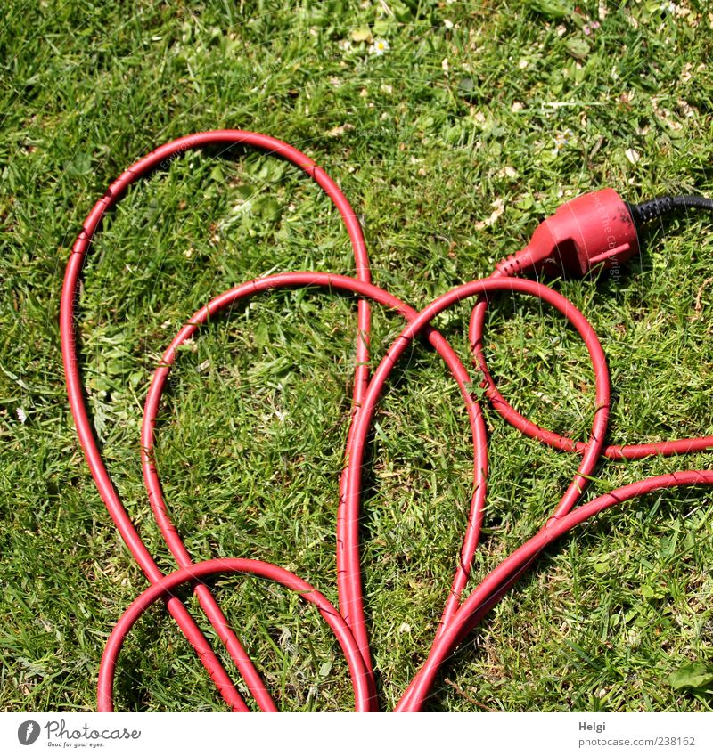 orderly confusion... Cable Connector Technology Grass Heart Line Lie Exceptional Long Green Red Uniqueness Perspective Electricity Muddled Colour photo