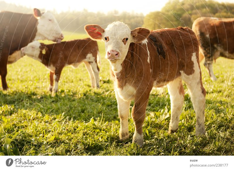 Nature Summer Animal Environment Healthy Eating Baby animal Meadow Small Happy Food Field Cute Group of animals Agriculture Pasture Animal face