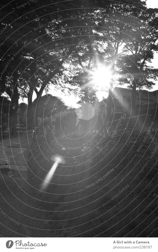 when the evening came Landscape Tree Illuminate Black England Rural Dazzle Lens flare Farm Idyll Street Calm Black & white photo Exterior shot Deserted Light